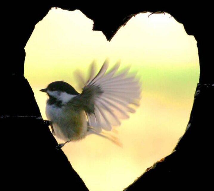 Leon Kotze – Pumping hearts